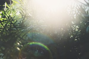 Fresh healthy bio background