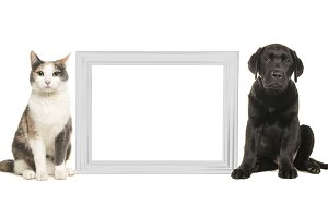 Adult cat and black labrador puppy dog sitting beside a white empty picture frame isolated on a white background