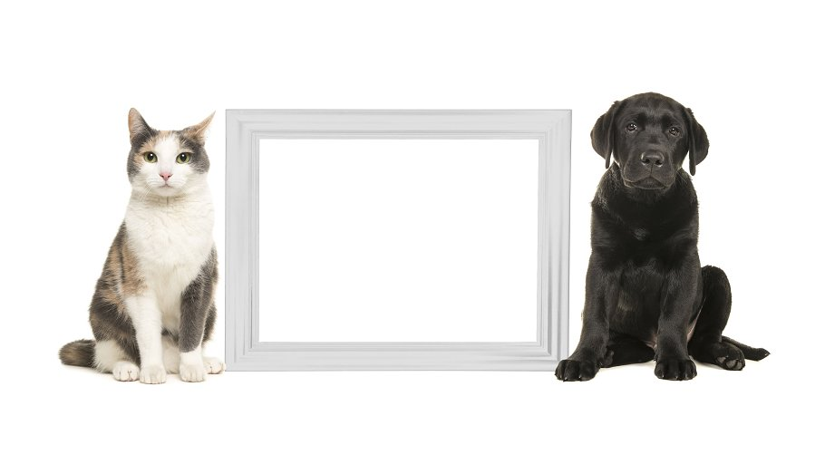 Adult cat and black labrador puppy dog sitting beside a white empty ...