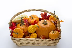 Basket full of pumpkins & gourds