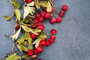 Red berries for autumn card