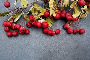 Berries for autumn card