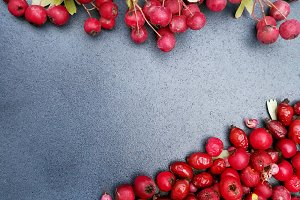 Red berries for autumn or Xma card