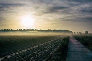 Mist over the heath