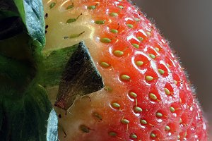 Strawberry Macro Side On