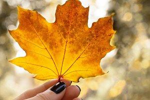 Female hand holds an autumn maple leaf. Autumn mood