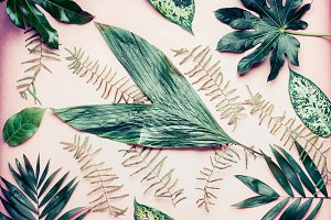Tropical plant leaves on pink