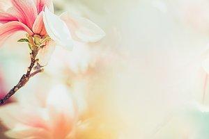 Wonderful  magnolia blossom