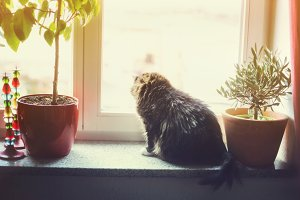 Home with cat on window sill