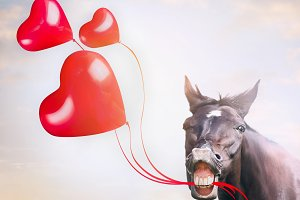 Horse with red hearts balloons