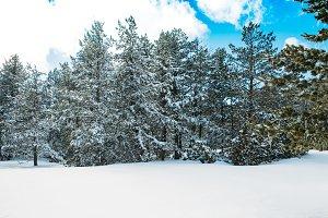 Winter Snowy Landscape Ski Resort