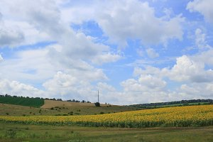 Beautiful landscape with sunflower field and green meadows under cloudy blue sky
