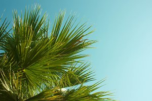 Green leaf of palm