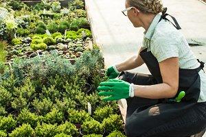 Choosing in the flower market