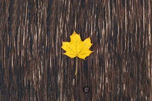 yellow maple leaf on a wooden board