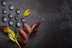 Blueberries background ,creative autumn background with berries of blueberries and leaves. view from above. pattern
