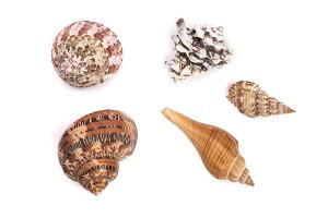 Seashells collection isolated on a white background