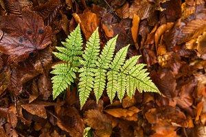 green leaf fern on yellow foliage