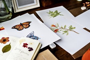 Drawings of Nature