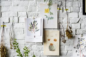 Illustration and Dried Flowers