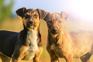 funny puppies with intelligent eyes, two with sunny hotspot