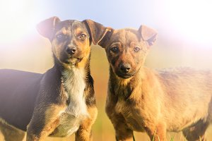 two puppys with merry eyes in the sunlight