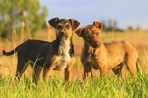 Puppies with merry eyes in among the green grass