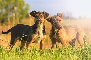Puppies with merry eyes in among the green grass with sunny hotspot