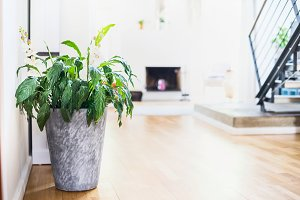 Green plant in living room interior