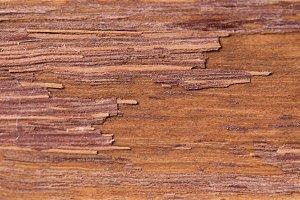 Brown wood background.