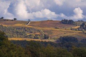 Vineyards of Chianti