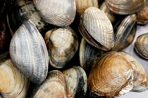 Fresh clams at market