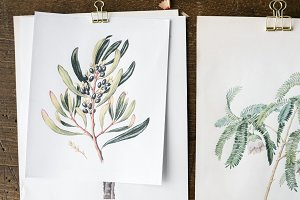 hand drawings of flowers on papers