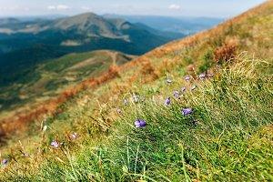 Beautiful green mountain landscape
