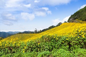 Flower field on the mountain