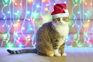 cat in Santa Claus xmas red hat