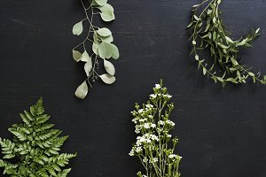 Wallpaper of plants leaves