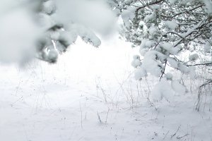 Snow background - winter holidays