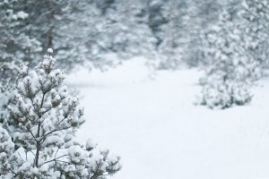 Winter forest snow photo background
