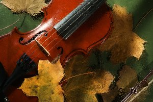 Violin and autumn leaves
