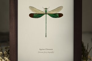A dragonfly in a photo frame