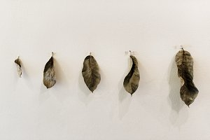 Dried leaves hanging on the wall