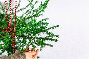 Girl hanging New Year red beads on a Christmas tree on a white background.