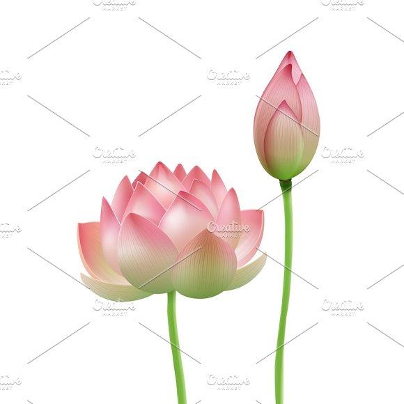 Pink lotus flower bud illustrations creative market pink lotus flower bud illustrations mightylinksfo