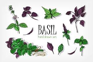 Set of basil plant