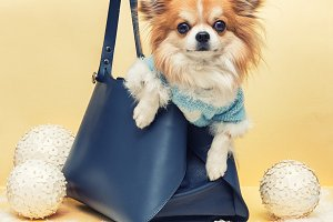 Small dog in the bag