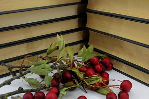 Books and red berries card