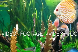 Exotic saltwater fish swimming in a big aquarium
