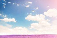 Romantic provence landscape.