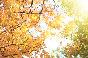 Autumn design background